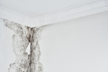 mold mildew in home on walls