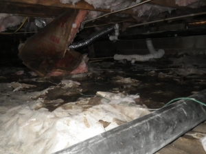 water in crawlspace total home performance